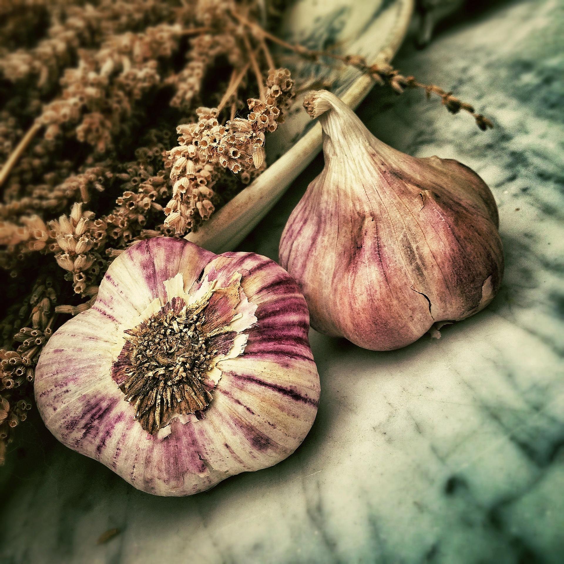 garlic-139659_1920